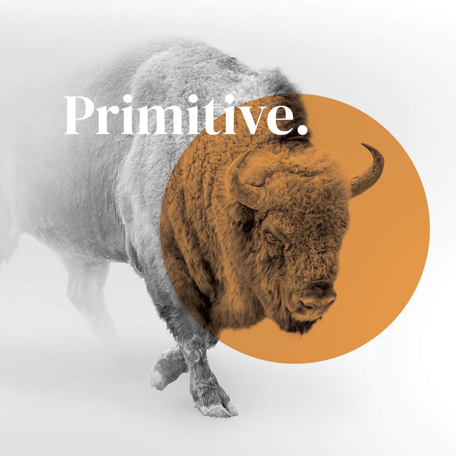 Primitive Banner